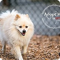 Adopt A Pet :: Johnny - Myersville, MD