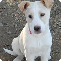 Adopt A Pet :: Miranda - dewey, AZ