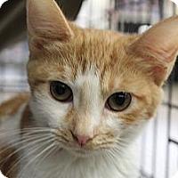 Adopt A Pet :: Jenny - Santa Monica, CA