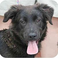Adopt A Pet :: Moe - kennebunkport, ME