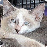 Adopt A Pet :: FrouFrou - Seminole, FL