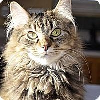 Adopt A Pet :: Tia - Xenia, OH