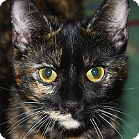 Adopt A Pet :: Pastina - North Branford, CT