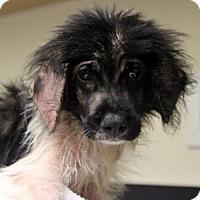 Adopt A Pet :: Milo - Atlanta, GA