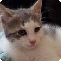 Adopt A Pet :: Freddie Fabulous! - Berkeley Hts, NJ