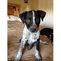 Adopt A Pet :: Blake - Tempe, AZ