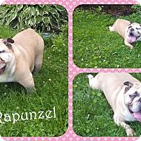Adopt A Pet :: Rapunzel - DOVER, OH