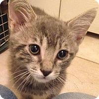 Adopt A Pet :: Fletch - Gainesville, FL