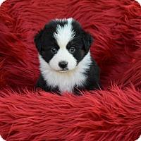 Adopt A Pet :: Serene - Groton, MA