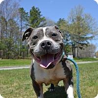 Adopt A Pet :: Miss Piggy - Brookhaven, NY