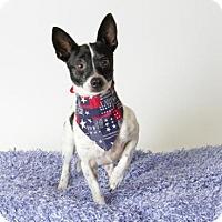 Adopt A Pet :: *RICO - Sacramento, CA