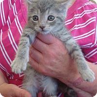 Adopt A Pet :: Stanley - Middleton, WI