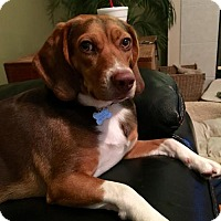 Adopt A Pet :: Roxanne II - Tampa, FL