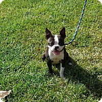 Adopt A Pet :: Dillan - Weatherford, TX