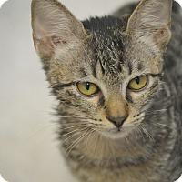 Adopt A Pet :: Dobby - San Leon, TX