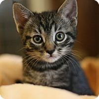 Adopt A Pet :: Simone - Canoga Park, CA