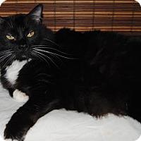 Adopt A Pet :: Nosy - Ridgeland, SC