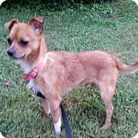 Adopt A Pet :: El Toro - LaGrange, KY