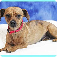 Adopt A Pet :: Quincy - South Bend, IN
