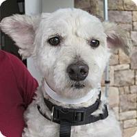 Adopt A Pet :: Shea - Carlsbad, CA