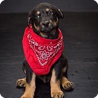 Adopt A Pet :: Bobby Brady - Waterbury, CT