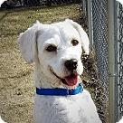 Adopt A Pet :: Lubbock