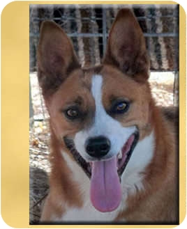 Cattle Dog Mix Dog for adoption in Scottsdale, Arizona - Lucy