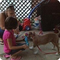Adopt A Pet :: Kalliope - Shavertown, PA