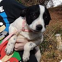Adopt A Pet :: Rita ($50 off) - Staunton, VA