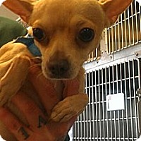 Adopt A Pet :: Rhett - Encinitas, CA