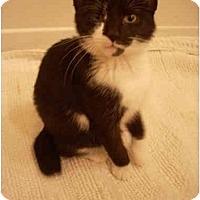 Adopt A Pet :: Penny - Bartlett, TN