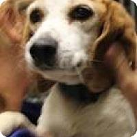 Adopt A Pet :: Sally - Mahopac, NY