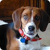 Adopt A Pet :: Della - Novi, MI