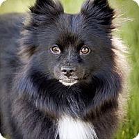 Adopt A Pet :: Charlie Adopted - Nine Mile Falls, WA