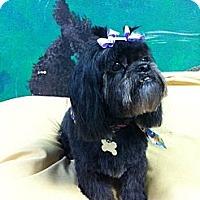 Adopt A Pet :: Tai - Goleta, CA