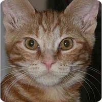 Adopt A Pet :: Jester (& Jupiter) - Arlington, VA