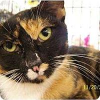 Adopt A Pet :: Melanie - Riverside, RI
