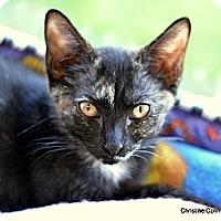Adopt A Pet :: Kylie - Island Park, NY