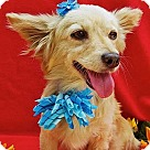 Adopt A Pet :: Coppertone