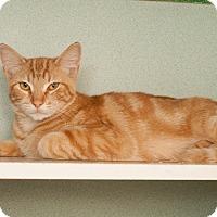 Adopt A Pet :: Spaghetti - Shelton, WA