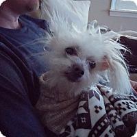 Adopt A Pet :: Wilbur - Arden, NC