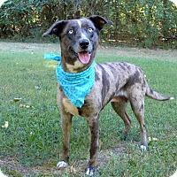 Adopt A Pet :: Luna - Mocksville, NC