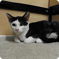 Adopt A Pet :: Penny - Riverside, CA