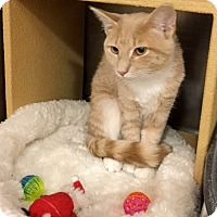 Adopt A Pet :: Peaches - Colmar, PA