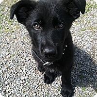 Adopt A Pet :: Pepperoni - El Cajon, CA