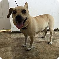 Adopt A Pet :: Cider - Lewisburg, TN