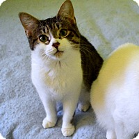 Adopt A Pet :: Emmeryn - Mississauga, Ontario, ON