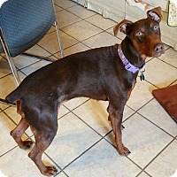 Adopt A Pet :: Isabella - New Richmond, OH