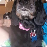 Adopt A Pet :: Cece - Ogden, UT