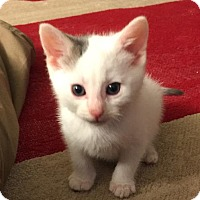 Adopt A Pet :: Joey - Leonardtown, MD